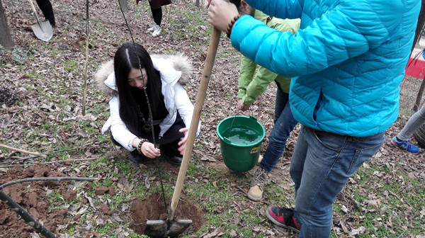 种树工具,并讲解植树的注意事项